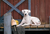 DOG 04 CE0018 01