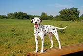 DOG 04 FA0004 01