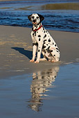 DOG 04 KH0004 01