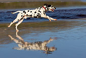 DOG 04 KH0005 01