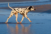 DOG 04 KH0007 01