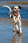 DOG 04 KH0009 01