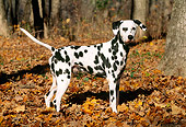 DOG 04 LS0001 01
