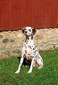 DOG 04 LS0002 01