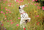 DOG 04 RK0004 12