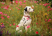 DOG 04 RK0004 15