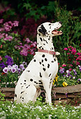 DOG 04 RK0008 02