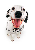DOG 04 RK0019 02