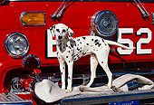 DOG 04 RK0025 09