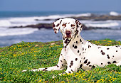 DOG 04 RK0047 04