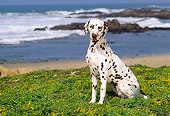 DOG 04 RK0048 02