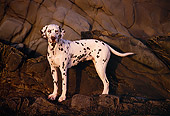 DOG 04 RK0059 04