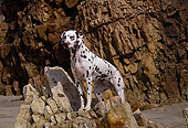DOG 04 RK0060 02