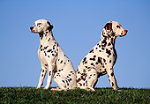 DOG 04 RK0095 04