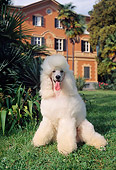DOG 05 AB0003 01