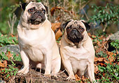 DOG 05 AB0009 01