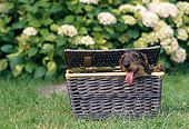 DOG 05 AB0012 01