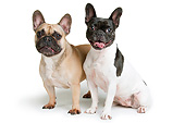 DOG 05 AC0012 01