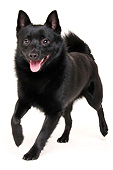 DOG 05 AC0015 01