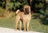 DOG 05 CB0005 01