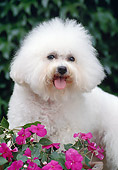 DOG 05 CB0009 01