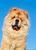DOG 05 CB0018 01