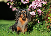 DOG 05 CB0022 01
