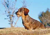DOG 05 CB0028 01