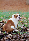 DOG 05 CB0031 01