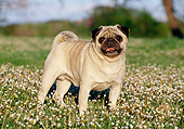 DOG 05 CB0047 01