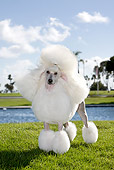 DOG 05 CB0076 01