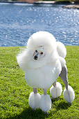 DOG 05 CB0077 01