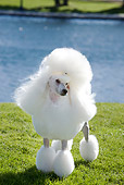 DOG 05 CB0078 01