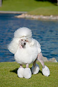 DOG 05 CB0080 01