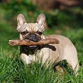 DOG 05 CB0114 01