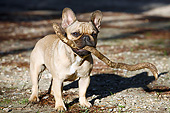 DOG 05 CB0123 01