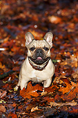 DOG 05 CB0125 01
