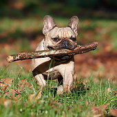 DOG 05 CB0128 01