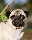 DOG 05 CB0133 01