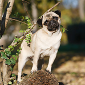 DOG 05 CB0134 01