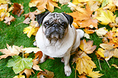 DOG 05 CB0147 01