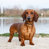 DOG 05 CB0167 01
