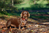 DOG 05 CB0169 01