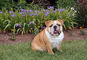 DOG 05 CE0041 01