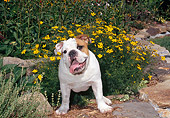 DOG 05 CE0042 01