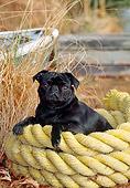 DOG 05 CE0045 01