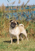 DOG 05 CE0046 01