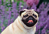 DOG 05 CE0050 01