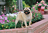 DOG 05 CE0052 01