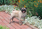 DOG 05 CE0053 01